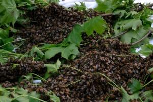 Swarm on the Floor