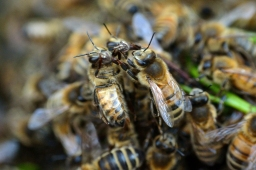 The Swarm – or 'One of our Queens is Missing'