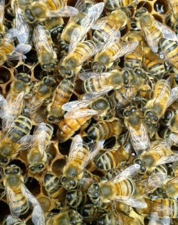 The Bees are Revolting