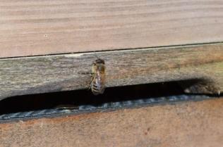 springbee2s